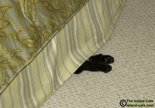cat sleeping under the bed