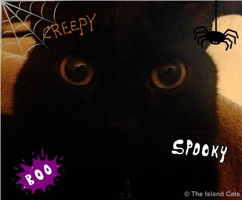 Spooky black cat selfie