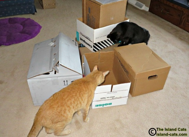 Cats with boxes