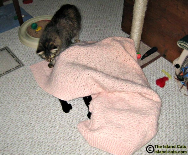 Cats playing under blanket