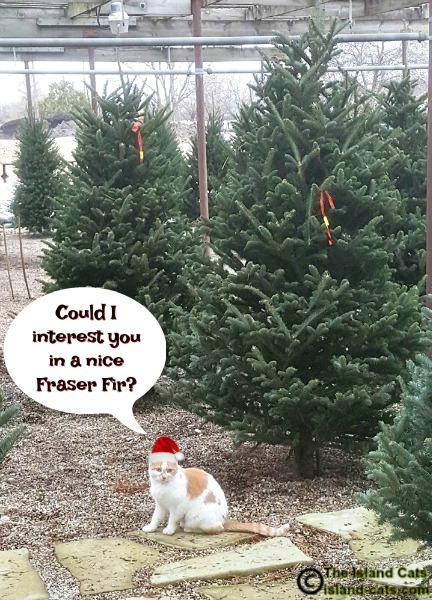 Cat with Christmas Trees