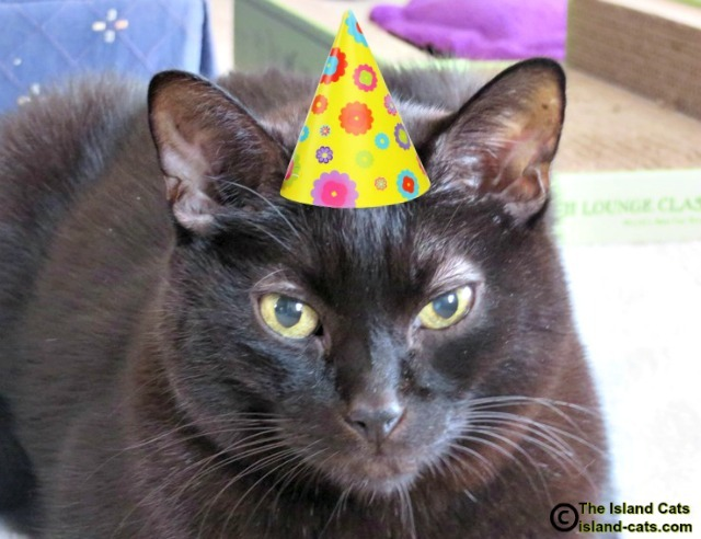 Cat wearing party hat