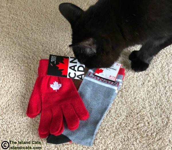 Cat sniffing socks