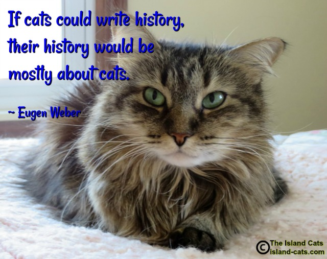 write about cat