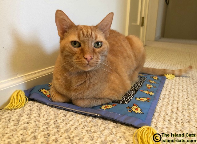 Cat sitting on boogie mat