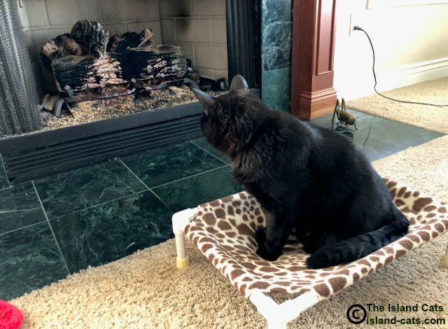 Cat looking at fireplace