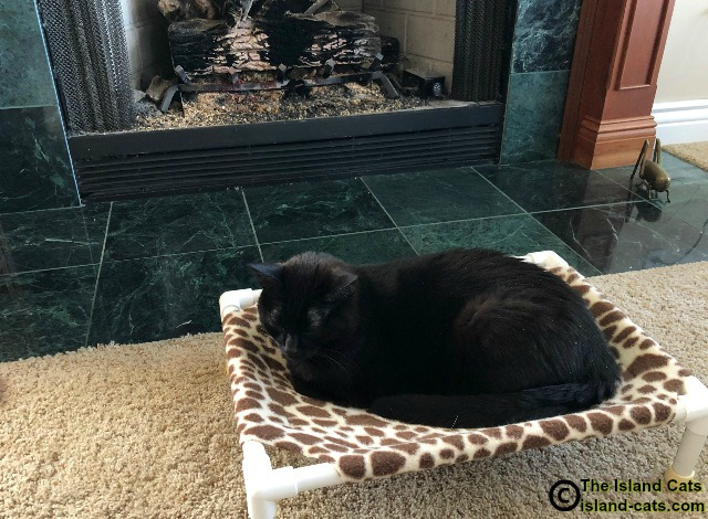 Cat laying in front of fireplace