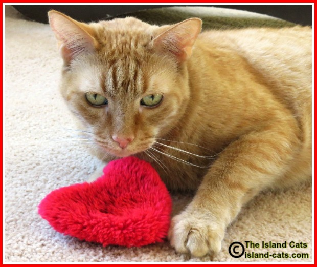 Cat with nip heart