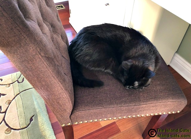 black cat sleeping on chair