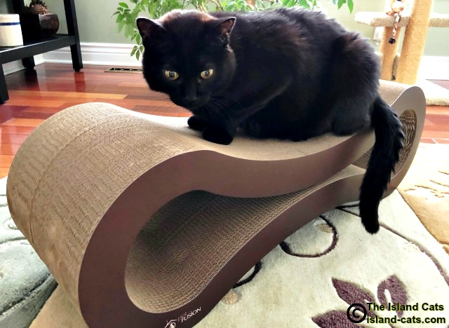 Cat on Pet Fusion scratcher