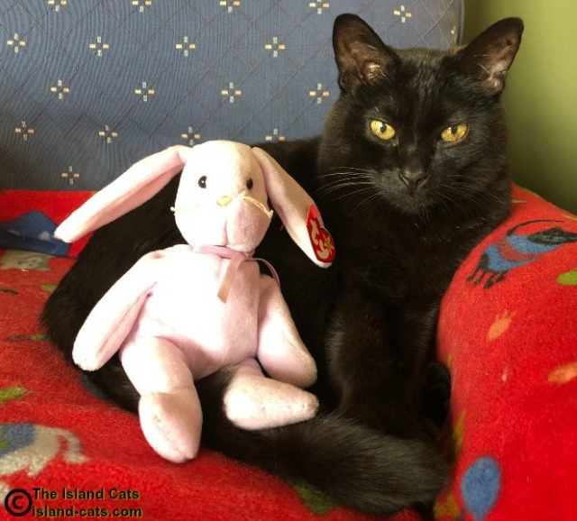 black cat with Easter bunny