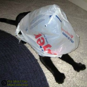 cat with plastic grocery bag