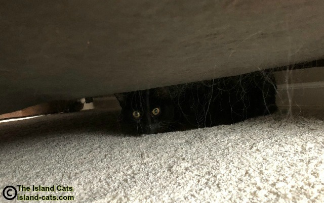 cat under the bed