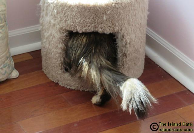 cat climbing into cat condo