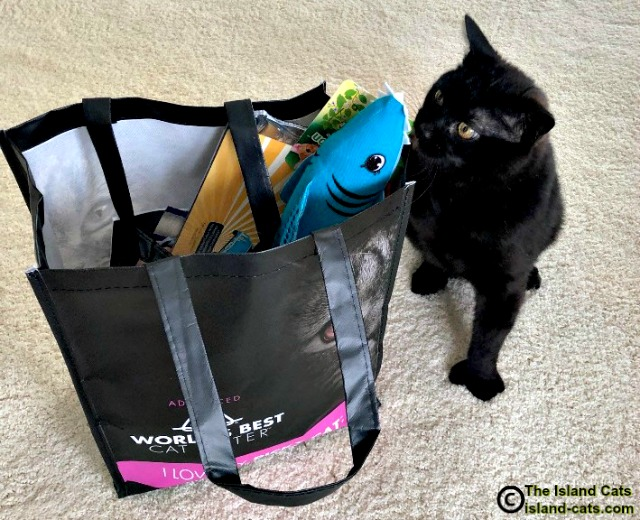 Black cat with bag