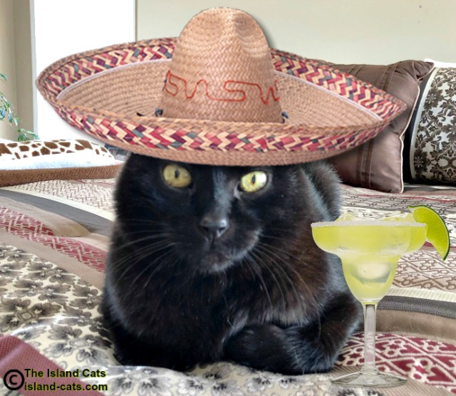 Black cat in a sombrero