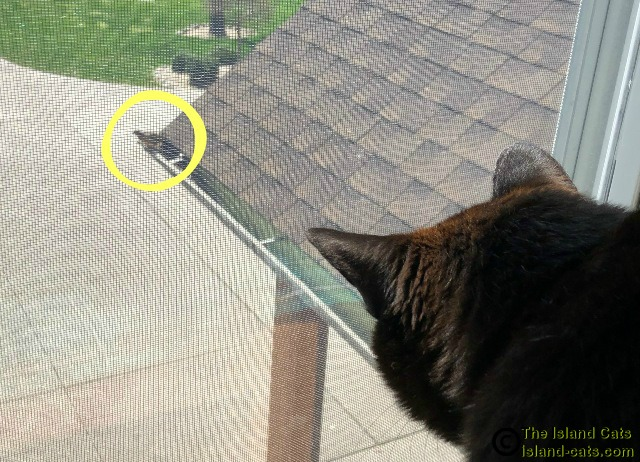 black cat looking at bird