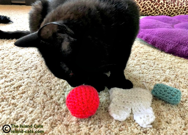 black cat with toys