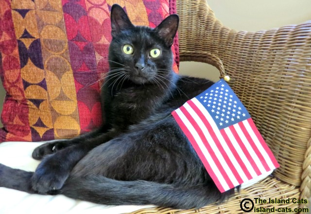 black cat with US flag
