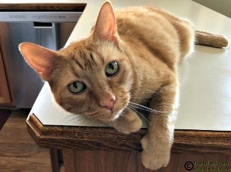 cat laying on counter
