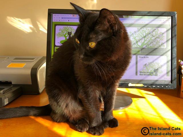 cat standing in front of computer screen