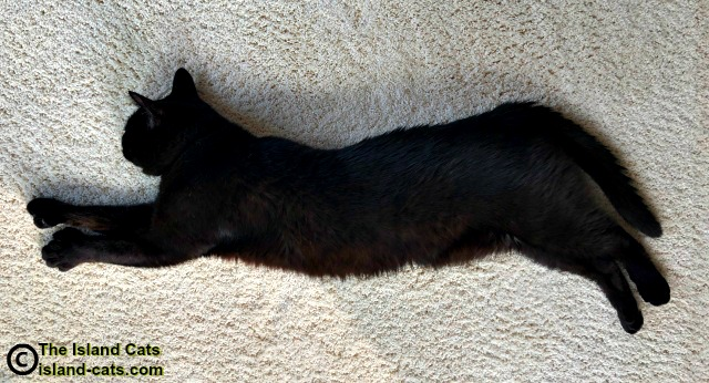 black cat all stretched out