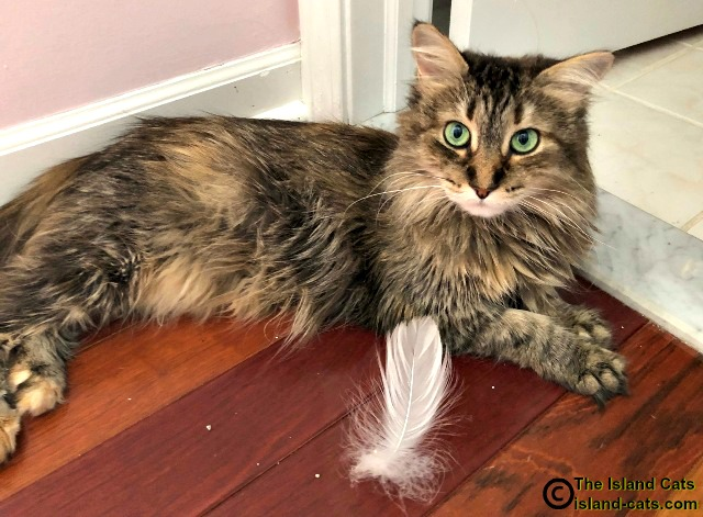 cat with feather