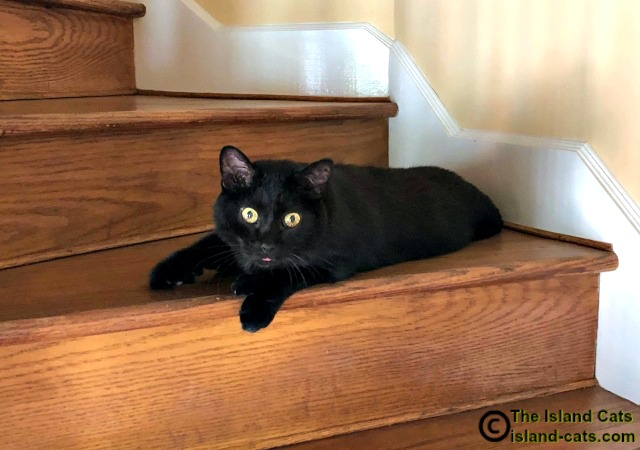 black cat laying on stairs