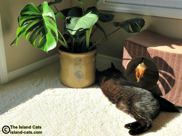 black cat laying next to monstera deliciosa