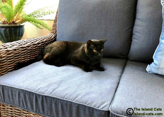 black cat sitting on sofa