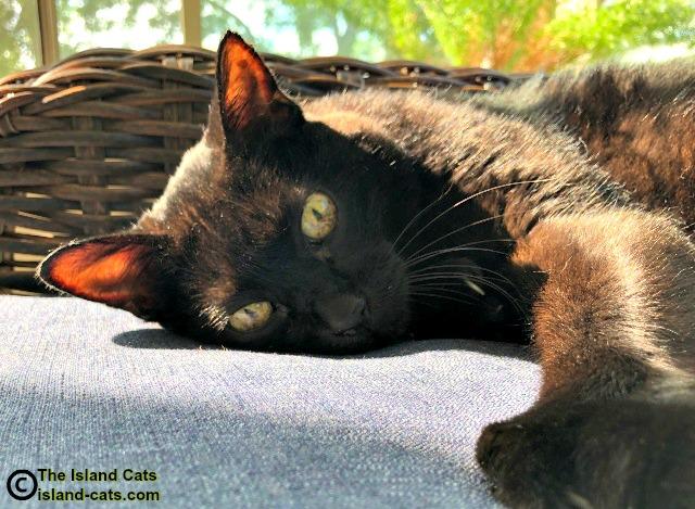 black cat lounging in sun
