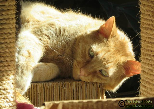 Wally in the sun