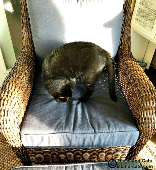Ernie on chair