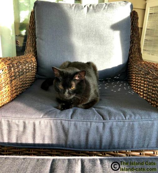 Ernie sitting on chair