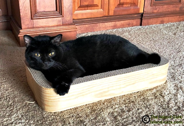 Ernie lying on his scratcher