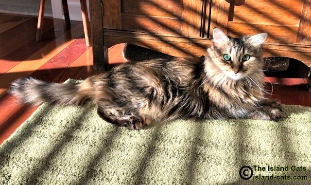 Zoey in the sun
