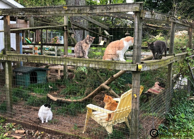 Outside area for FIV cats