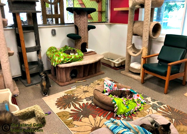 One of the cat rooms at Froggie's Pond