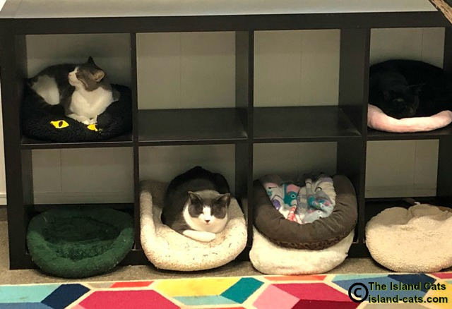 Some of the cat residents relaxing
