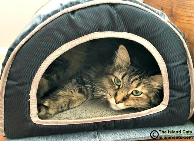 Zoey in her cabana