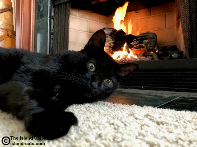 Ernie's selfie in front of the fire