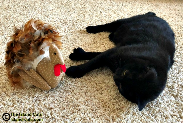 Ernie with Mr. Turkey