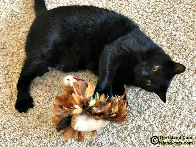 Ernie playing with Mr. Turkey