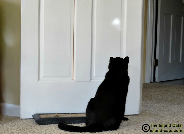 Ernie watching the white blob