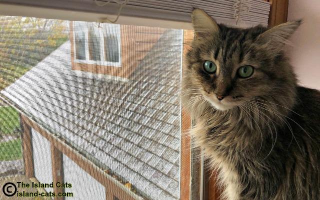 Zoey sitting in window