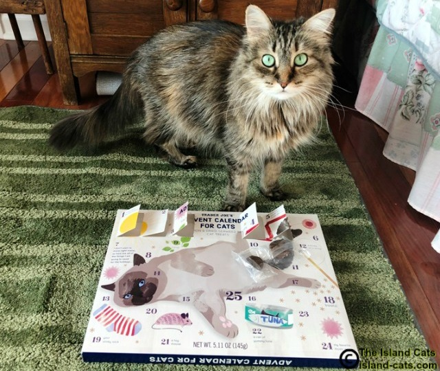 Zoey with Advent calendar
