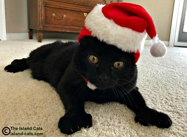 Ernie wearing a Santa Hat