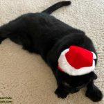 Santa Hat Outtakes