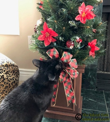 Ernie with face in Christmas tree bow