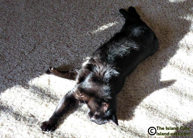 Ernie lying in the sun